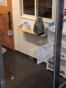 高松貓CAFE