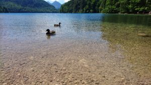 Lake Alpsee