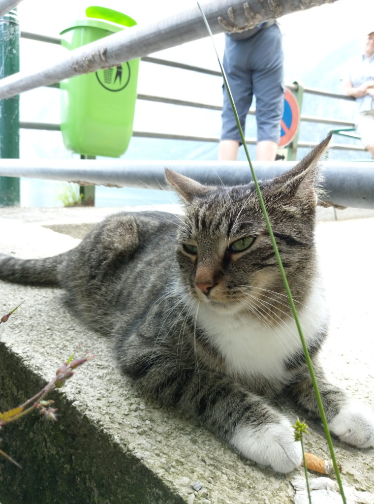 Hallstatt貓